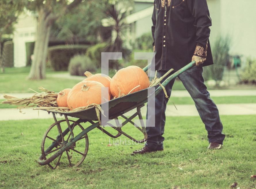 wheel barrow of pumpkins