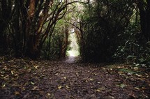 path through a thick forest