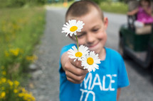 a boy child holding out white daisy flowers