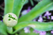 A budding flower.