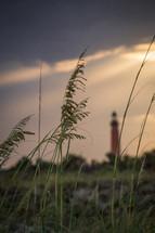 sea oats and lighthouse