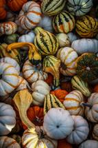 pile of striped pumpkins