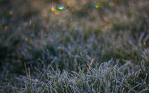 Rainbow bokeh over frosted grass on a cold winter's morning