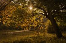 sunburst through fall trees