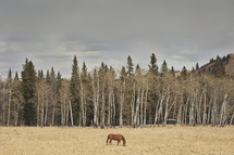 a single horse in field with trees