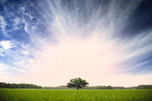 isolated tree in a green meadow and radiating white clouds