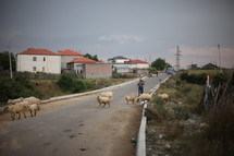 Man herding sheep across a street in a village.