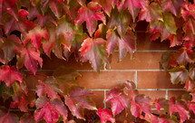 red maple leaves border around brick wall