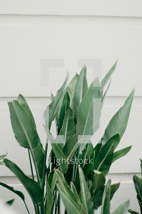 green leaves on plants on the side of a house