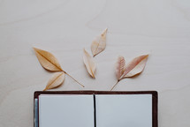 dried leaves on blank pages of a journal