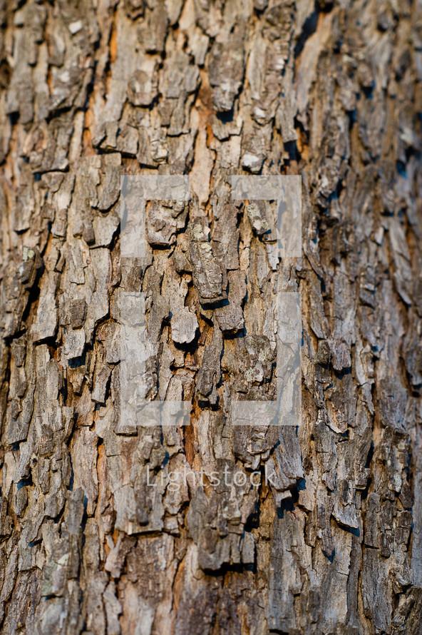 tree bark