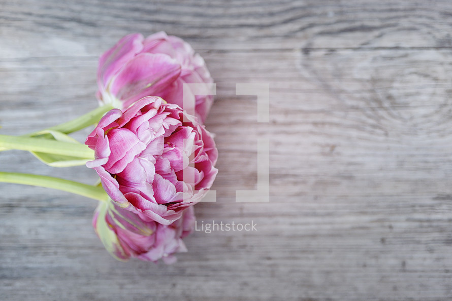 pink peonies on weathered wood boards