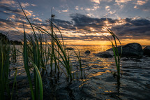 tall water reeds in a bay at sunset