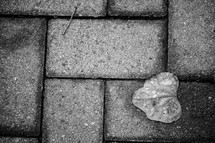 wet heart shape leaf on bricks