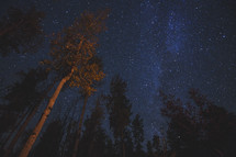 tree tops and a starry night sky