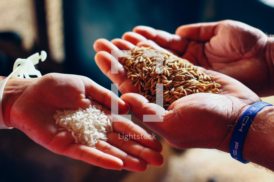 cupped hands holding rice grains