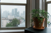 house plant in the window of a city apartment