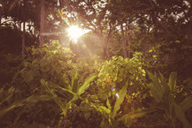 sunburst through an opening in the forest
