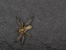 Spider crawling on an asphalt road