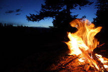 campfire against a dark blue sky, and a silhouette of a tree. close up yellow and orange flame