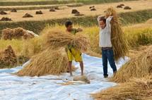 men carrying bundles of hay