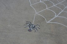 spider and spider web