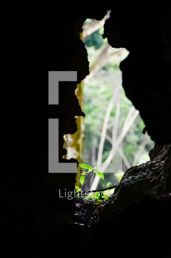 Seedling and trees seen through a hole in the rocks.