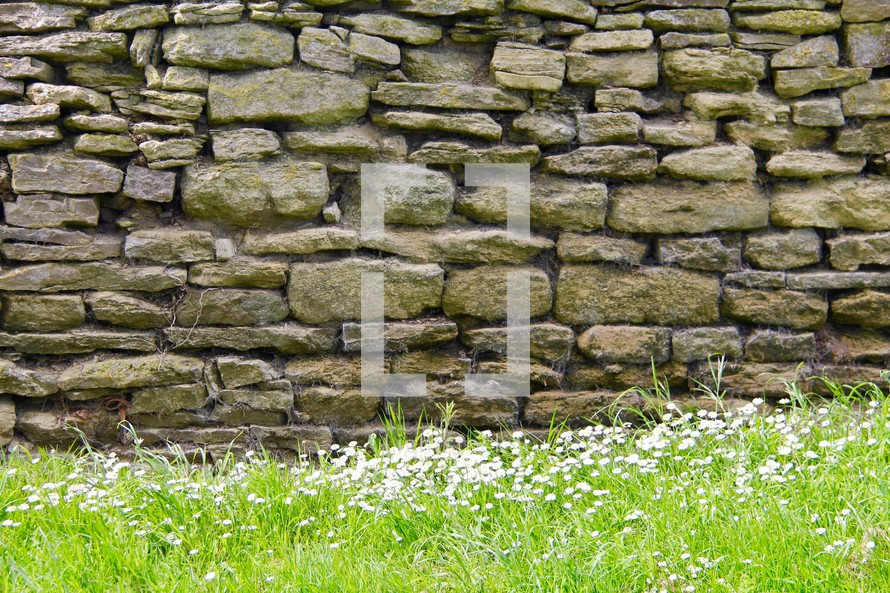 white daises at the bottom of a stone wall