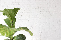 A green plant in front of a white brick wall.