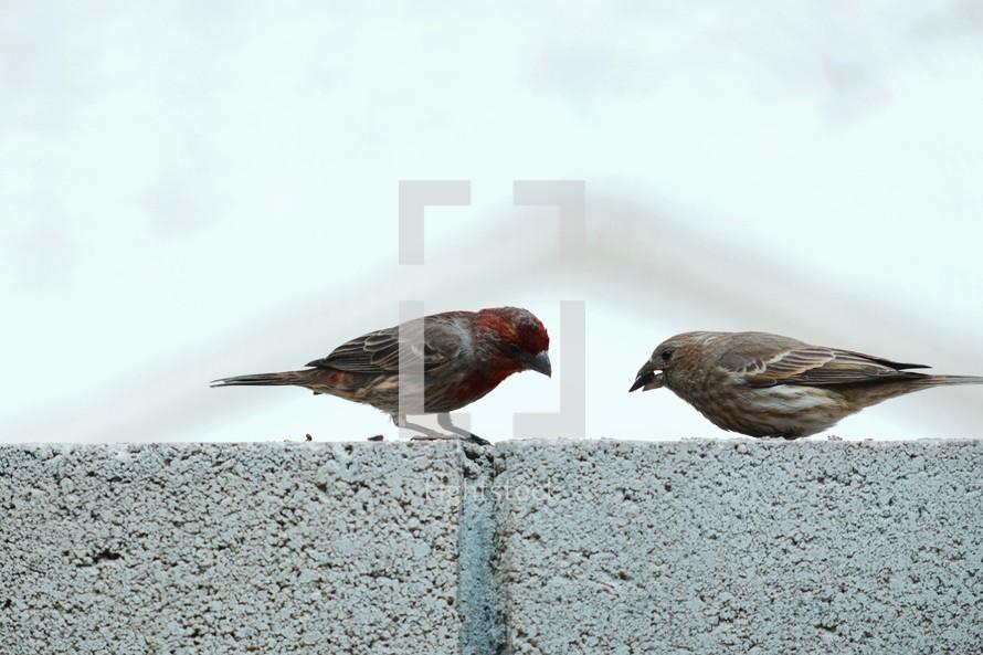 a couple of sparrows