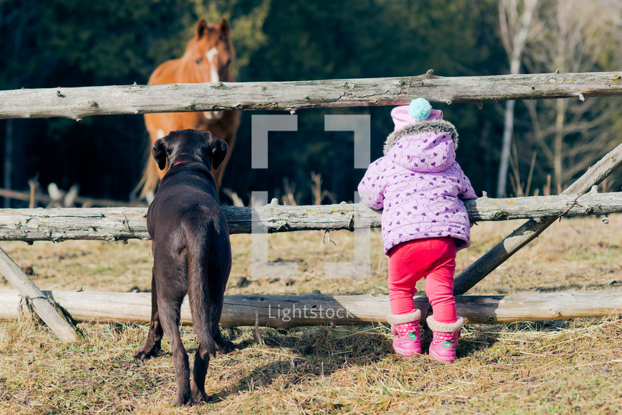 toddler girl and her dog watching horses