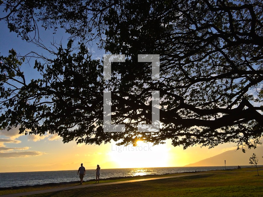 silhouette of a tree and a couple walking on a beach