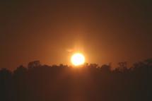 sun setting behind a tree line