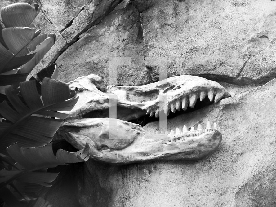 A black and white photograph of the remains of fossilized dinosaur bones embedded in rock in the earth's layers uncovered from an archaeological dig.