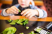a boy cutting up spinach