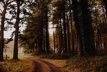 dirt road through rural landscape