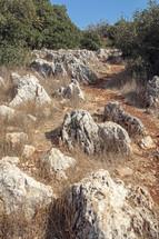 Rocky pathway through brush