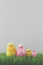fuzzy Easter chicks in grass