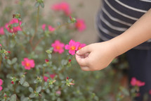 child touching flowers