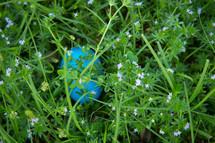 plastic Easter egg hidden in grass
