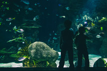 silhouette of children looking at fish at an aquarium
