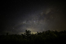 palm trees in a jungle under stars in the night sky