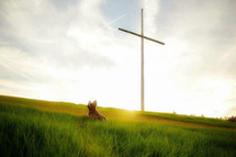 a dog in a field of green grass and cross on a hill