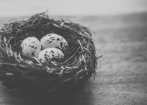 speckled bird's eggs in a nest on a table