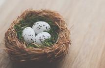 bird's eggs in a nest on a table