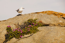 A seagull sitting on a rock