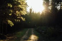 sunlight shining on a dirt road