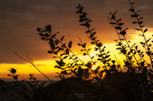 silhouette of leaves on a bush at sunset