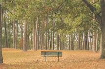 park bench overlooking a forest