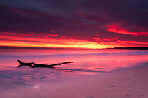 driftwood and white sand beach under the glow of a pink and purple sky at sunset